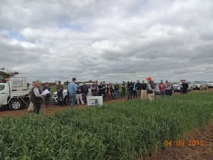 Farmers and Industry representatives at Mid North Crop Walk