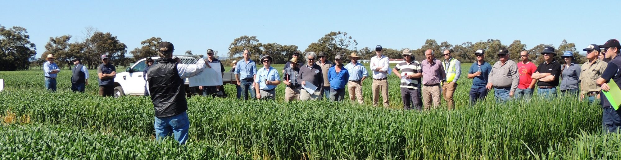 Southern Australia Durum Growers Association Inc