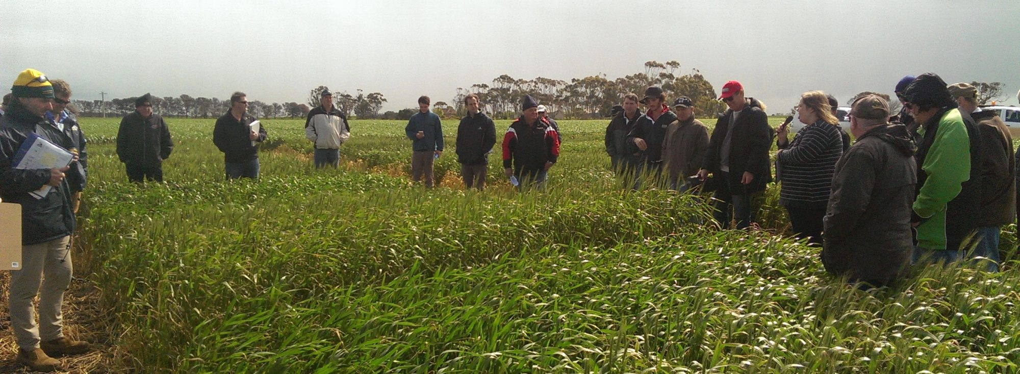The Southern Australia Durum Growers Association Inc